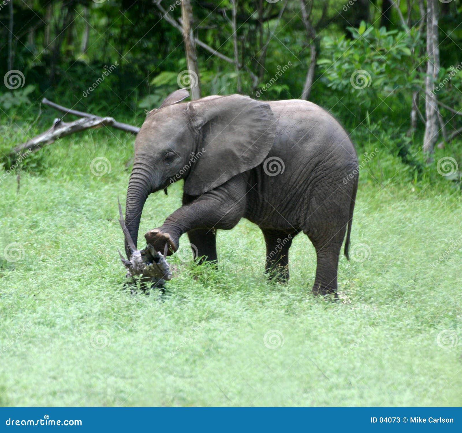 El estirar del elefante