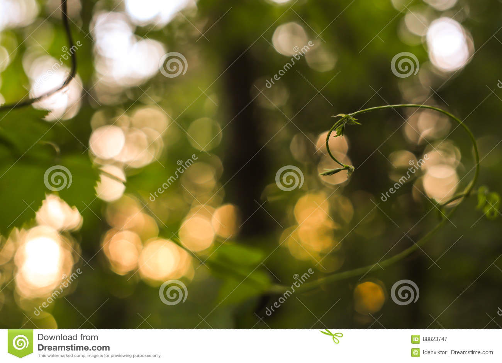 El extracto verde y amarillo empañó el fondo con la planta y el bokeh hermoso en luz del sol Imagen macra con el pequeño departam