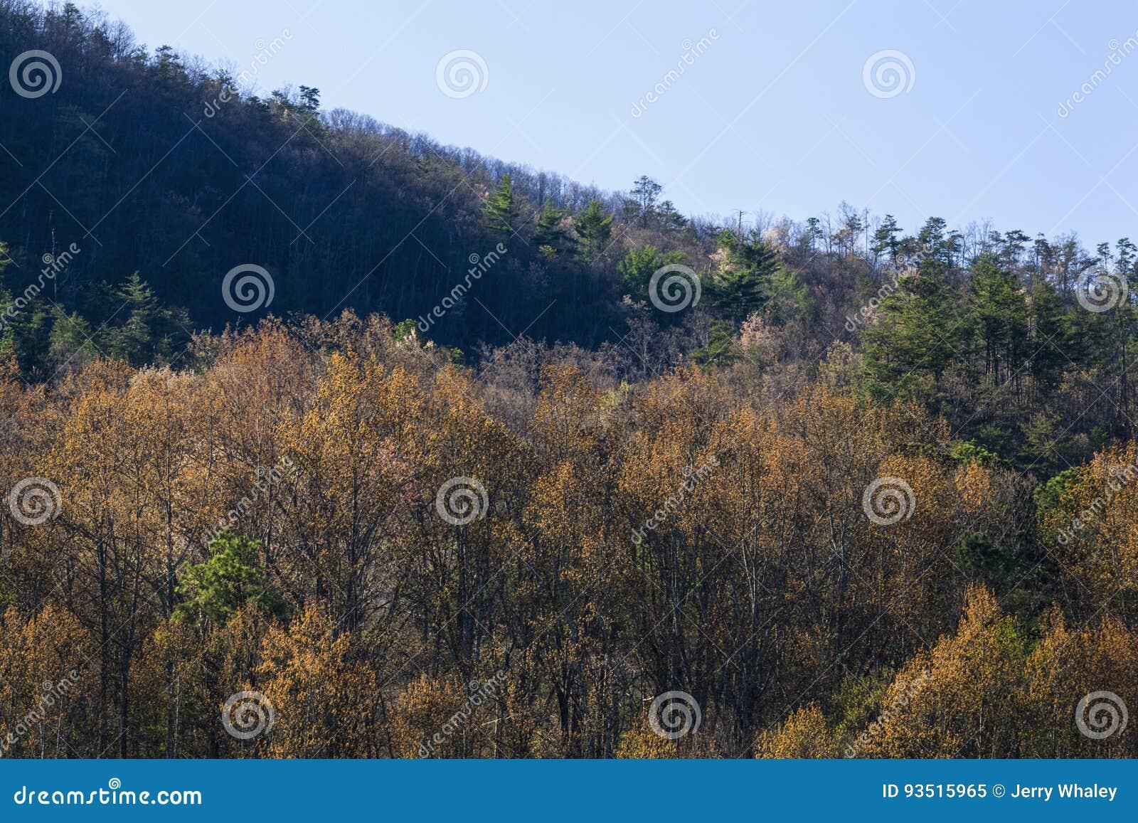El follaje temprano de la primavera, lleva el valle, TN