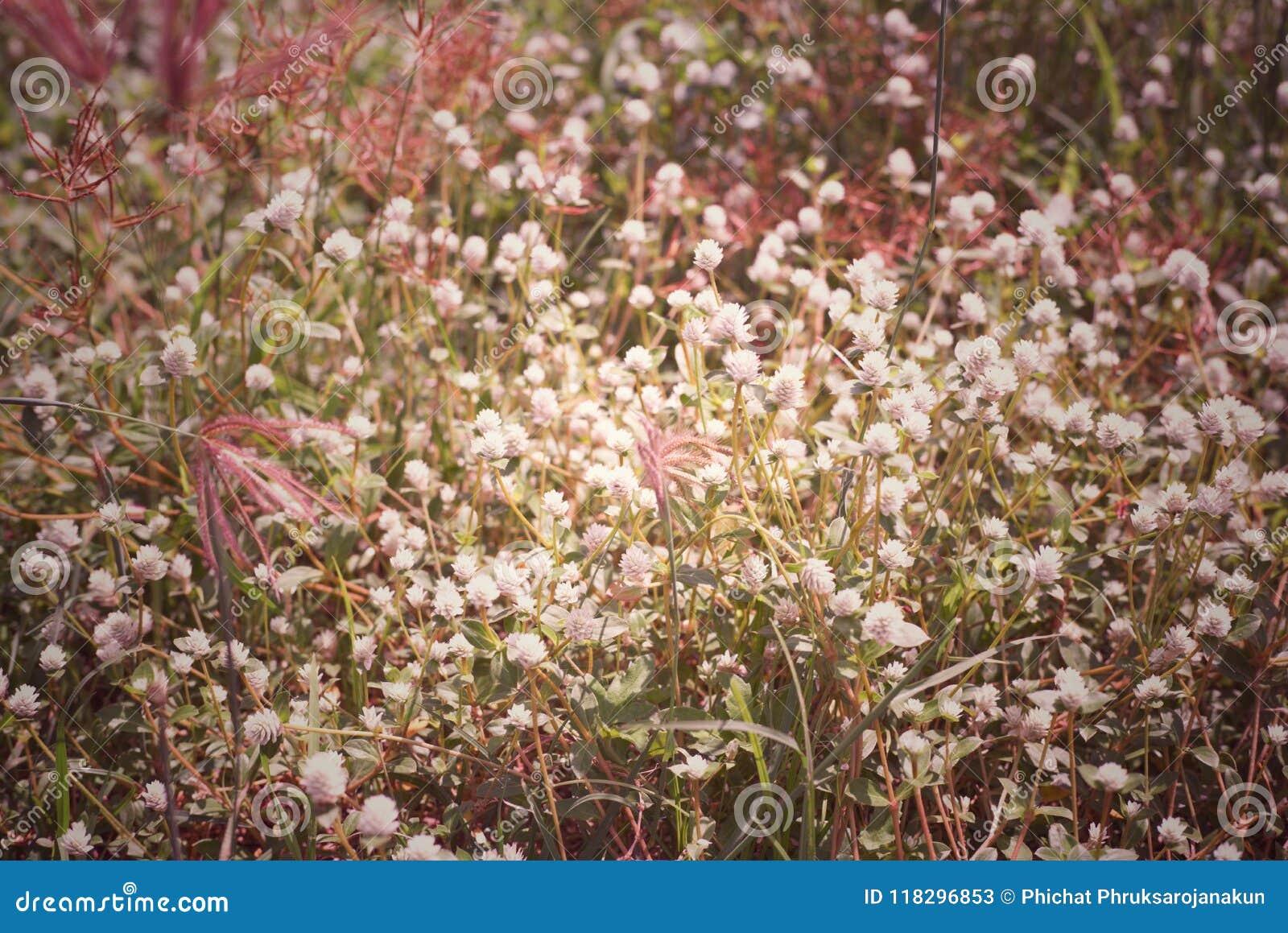 El fondo abstracto del vintage de la hierba de la flor y la mala hierba en el prado colocan