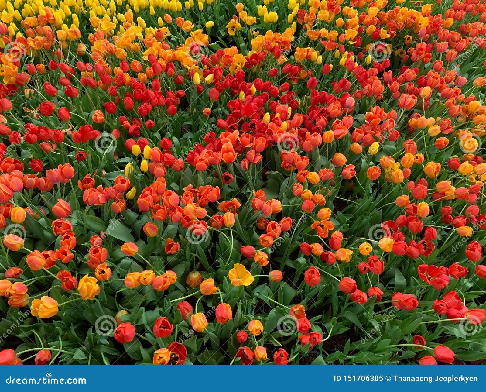 El fondo anaranjado de las flores