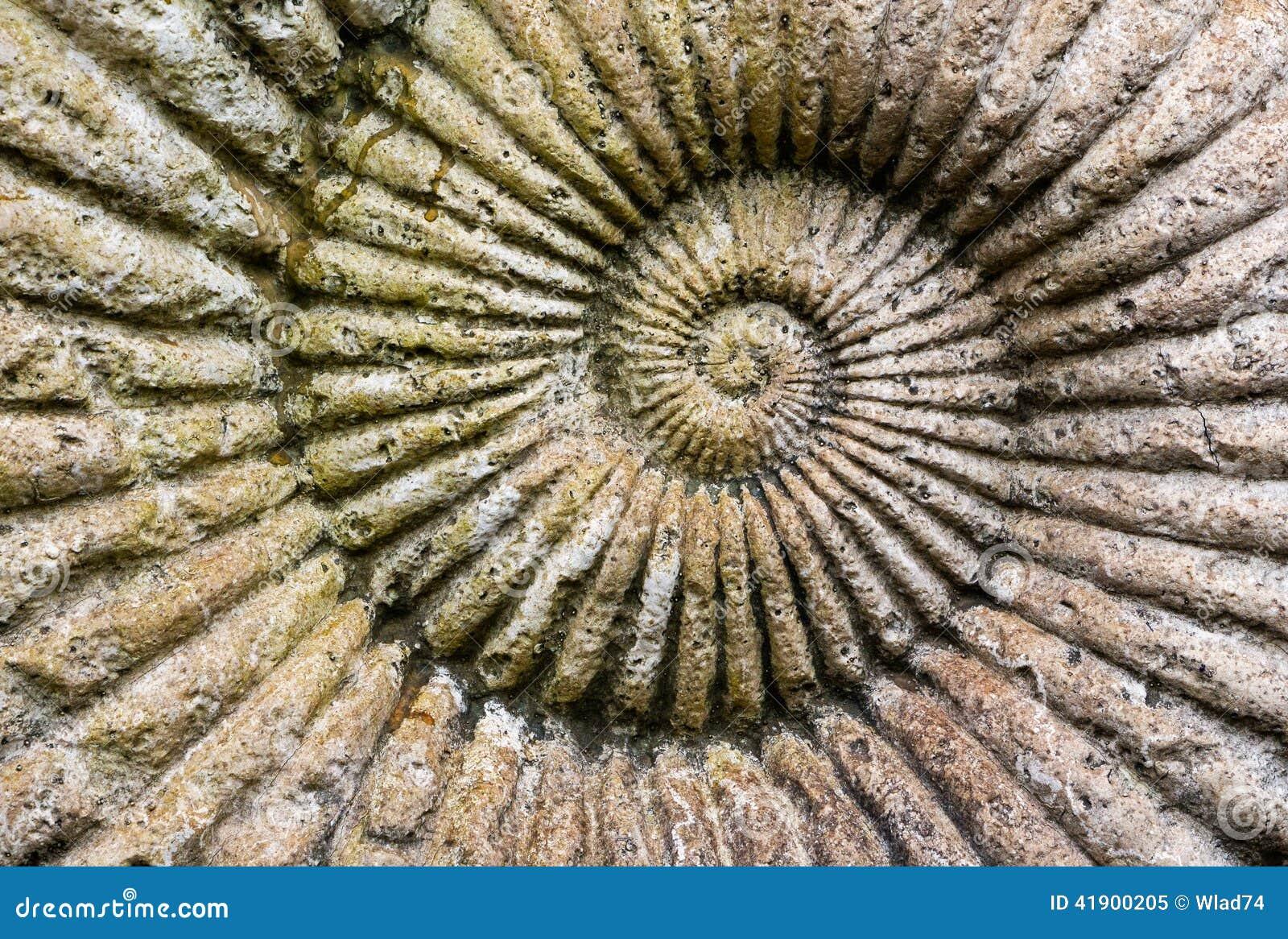 El fondo de la amonita fósil en una piedra