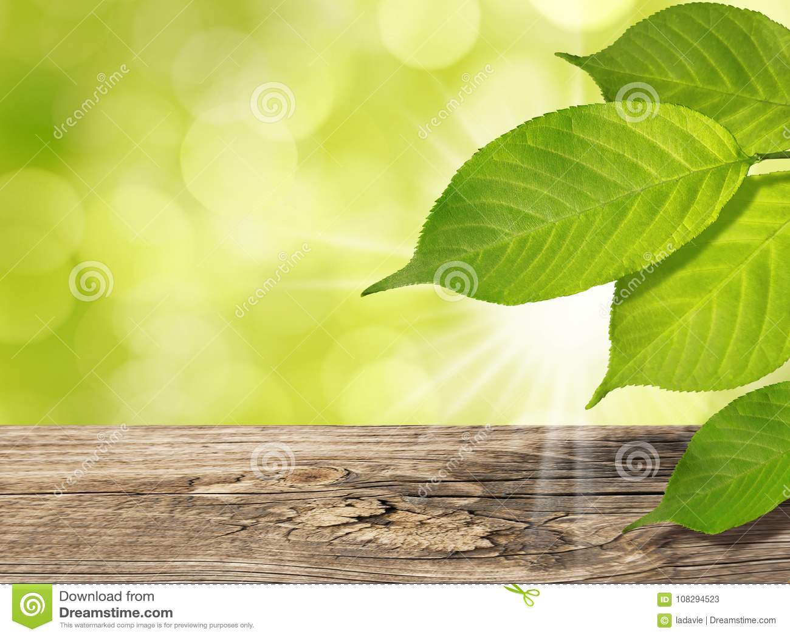 El fondo de la primavera del verano con el árbol verde sale de luz del sol de la tabla y de los rayos de madera de Sun