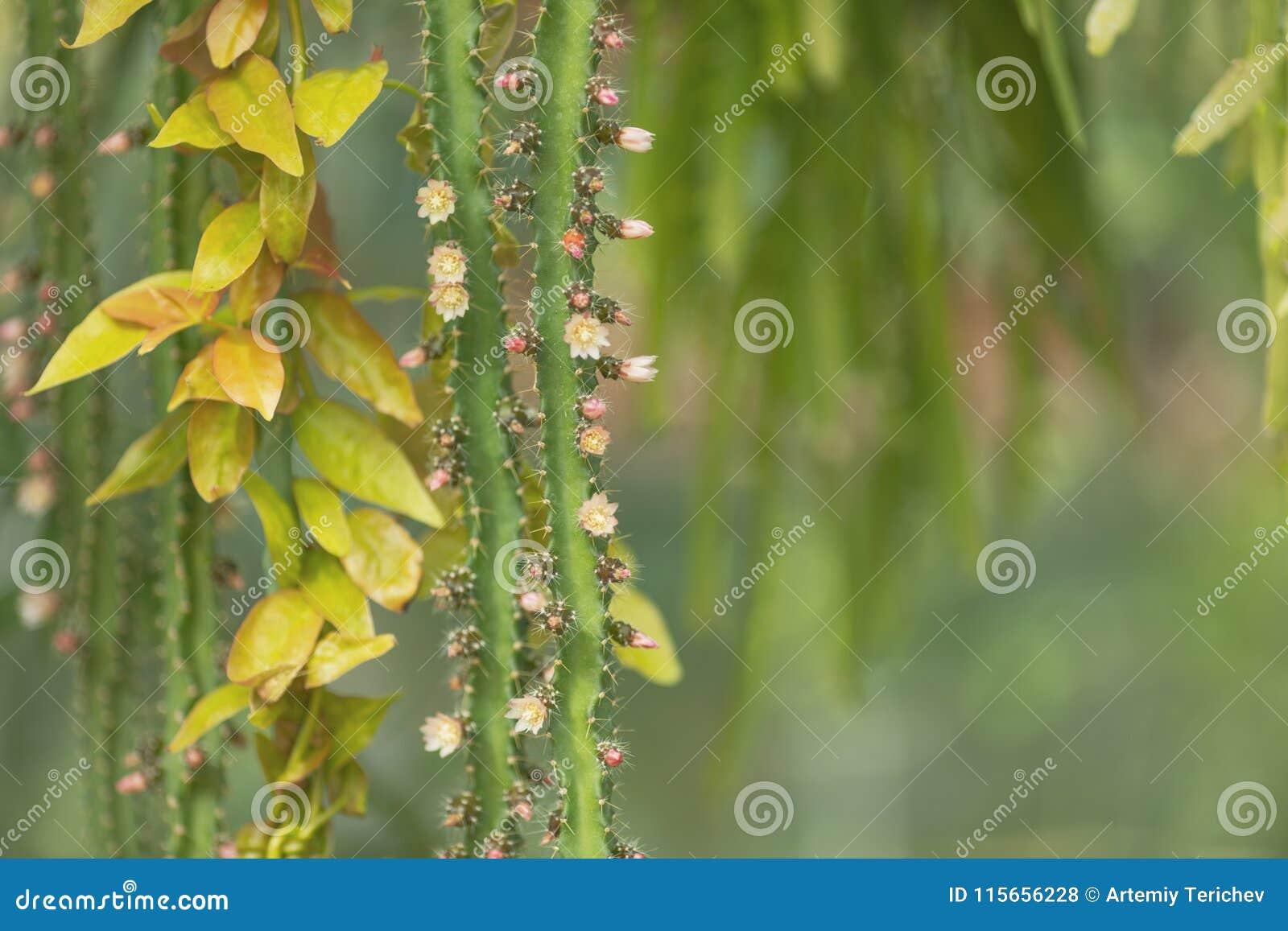 El fondo de troncos, de agujas, de hojas y del cactus florece