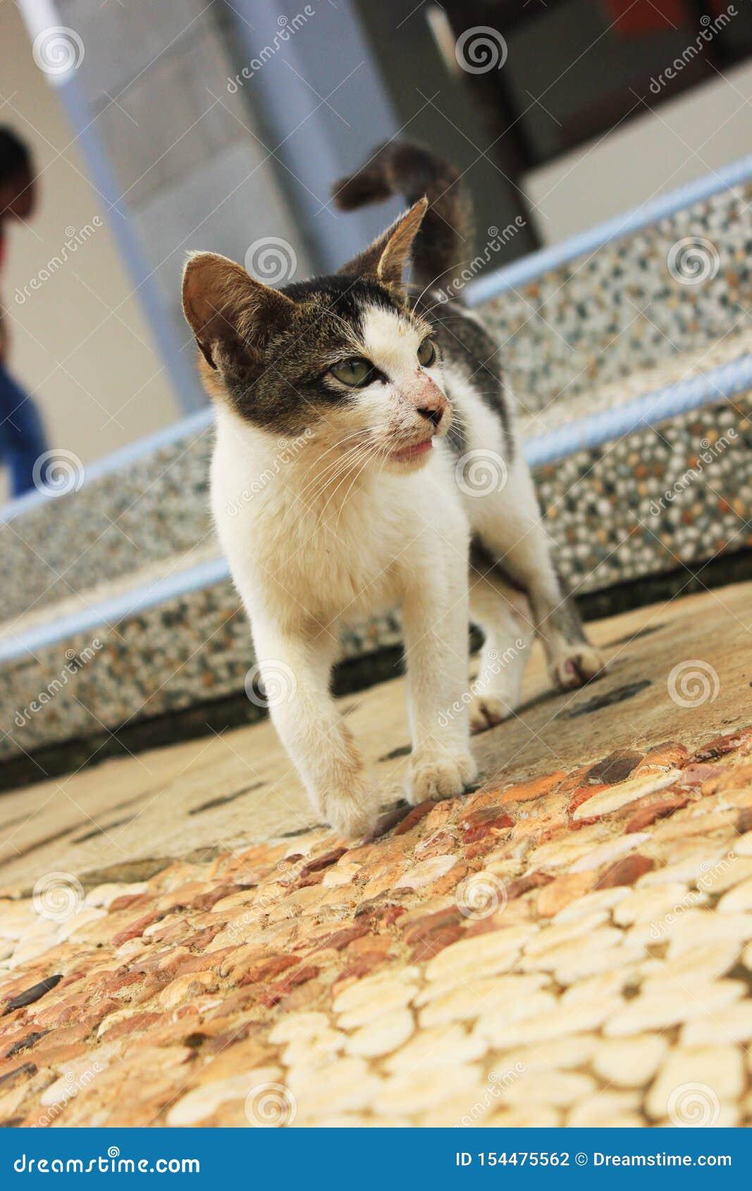 El gatito lindo curioso en jardín
