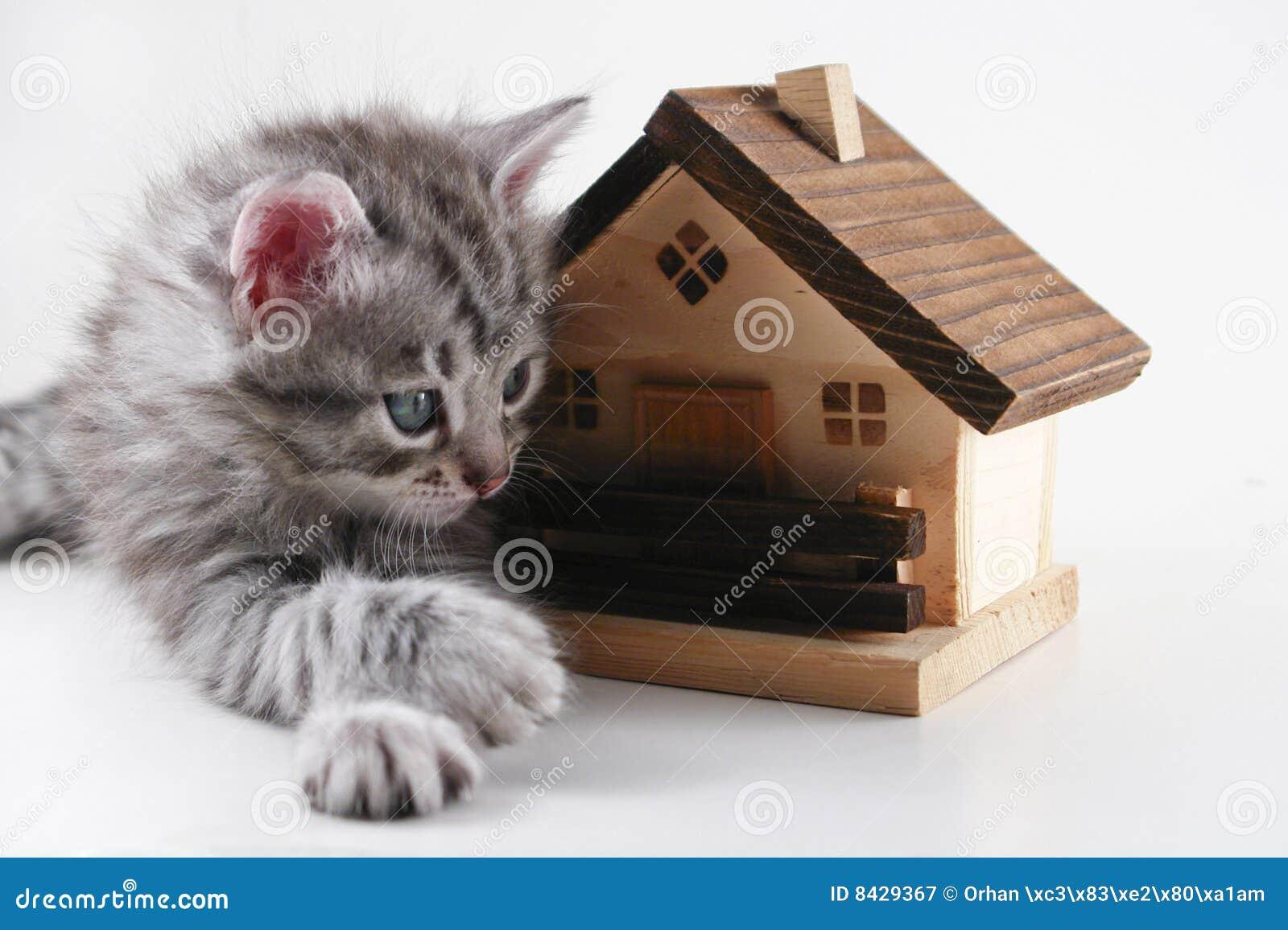 El gatito tiene propiedades inmobiliarias