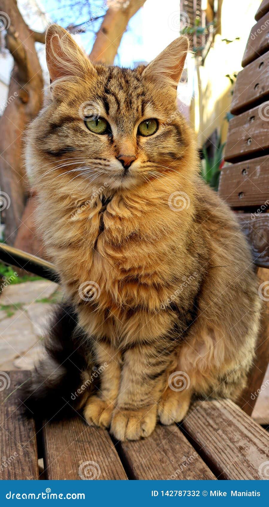 El gato con los ojos verdes en el stret