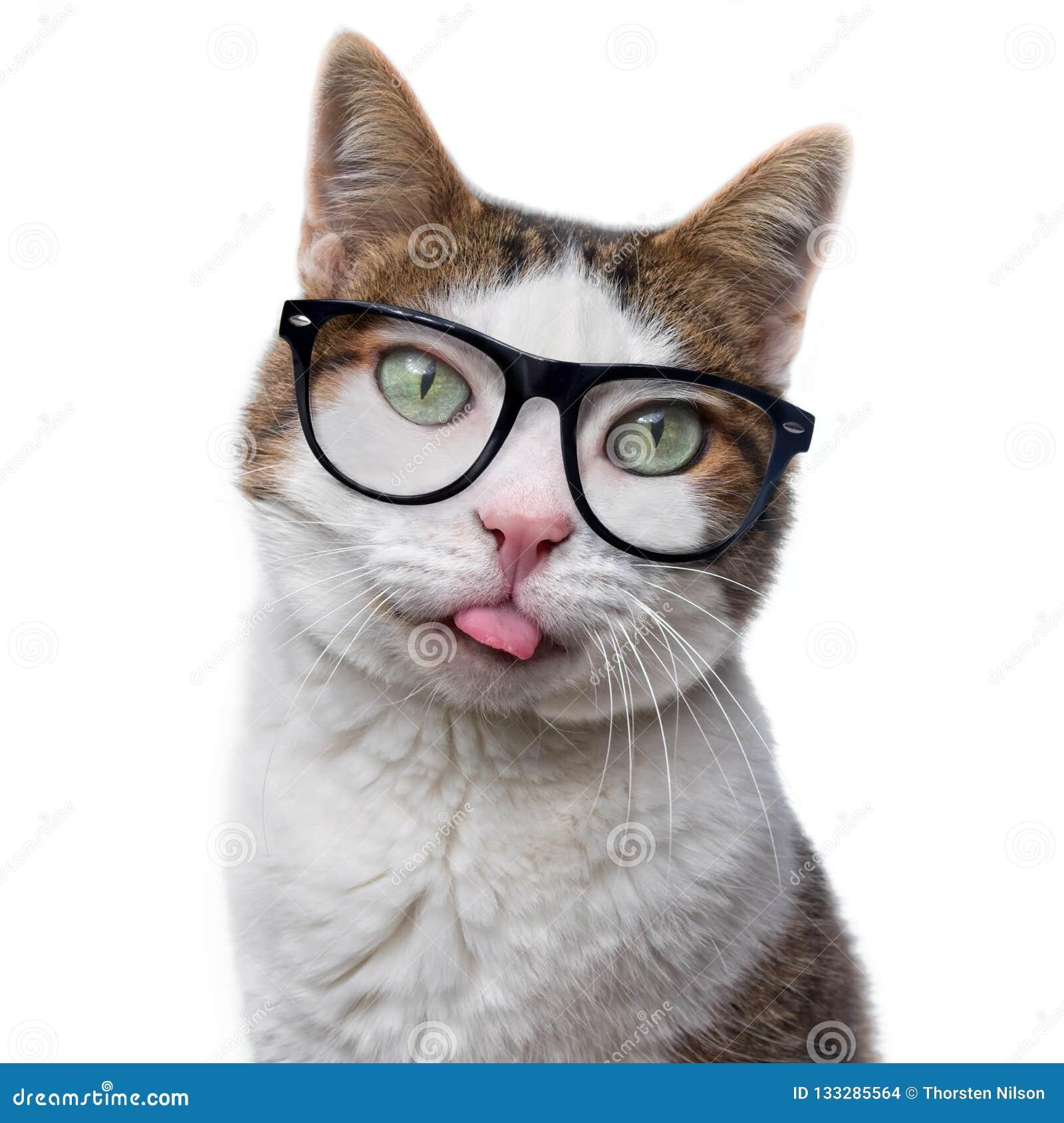 El gato de gato atigrado divertido en vidrios del empollón puso hacia fuera su lengua Es