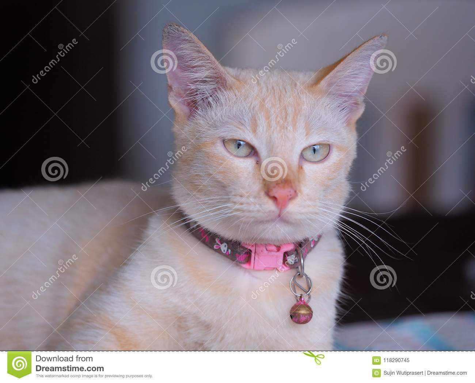 ojos y piel de color amarillo pálido