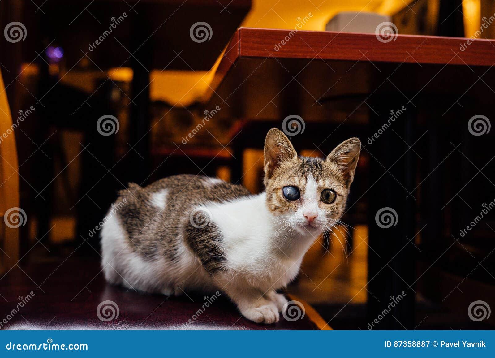 El gato en las persianas tricoloras mestizas sin hogar de la silla de la calle un ojo Él mira en el marco místico