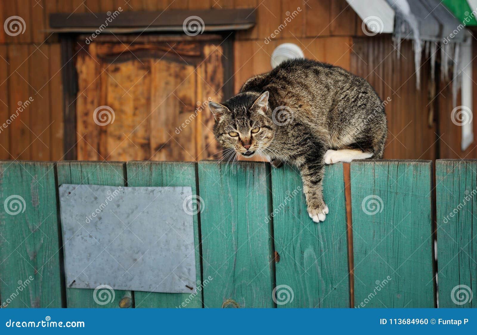 El gato enojado se sienta en una cerca