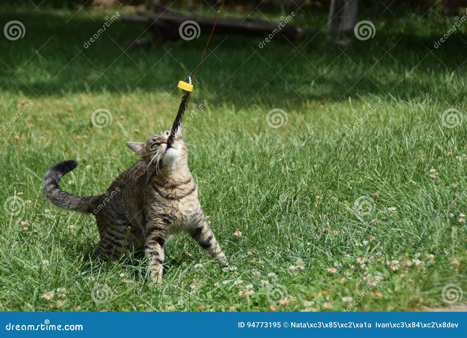 El gato está jugando con una pluma en la yarda