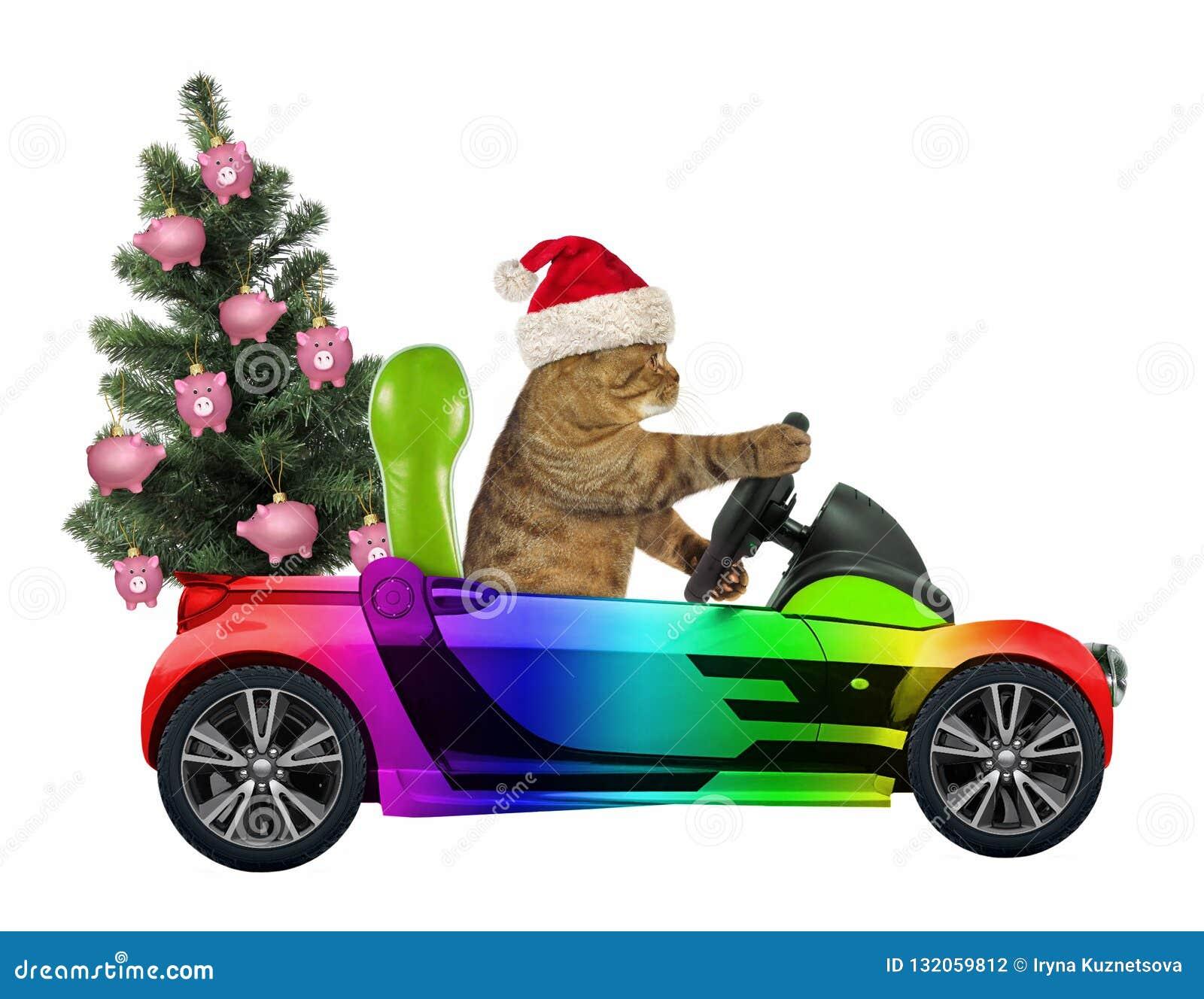 El gato lleva un árbol de navidad 2
