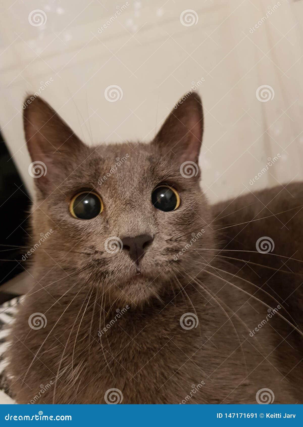 El gato que tiene una mirada divertida