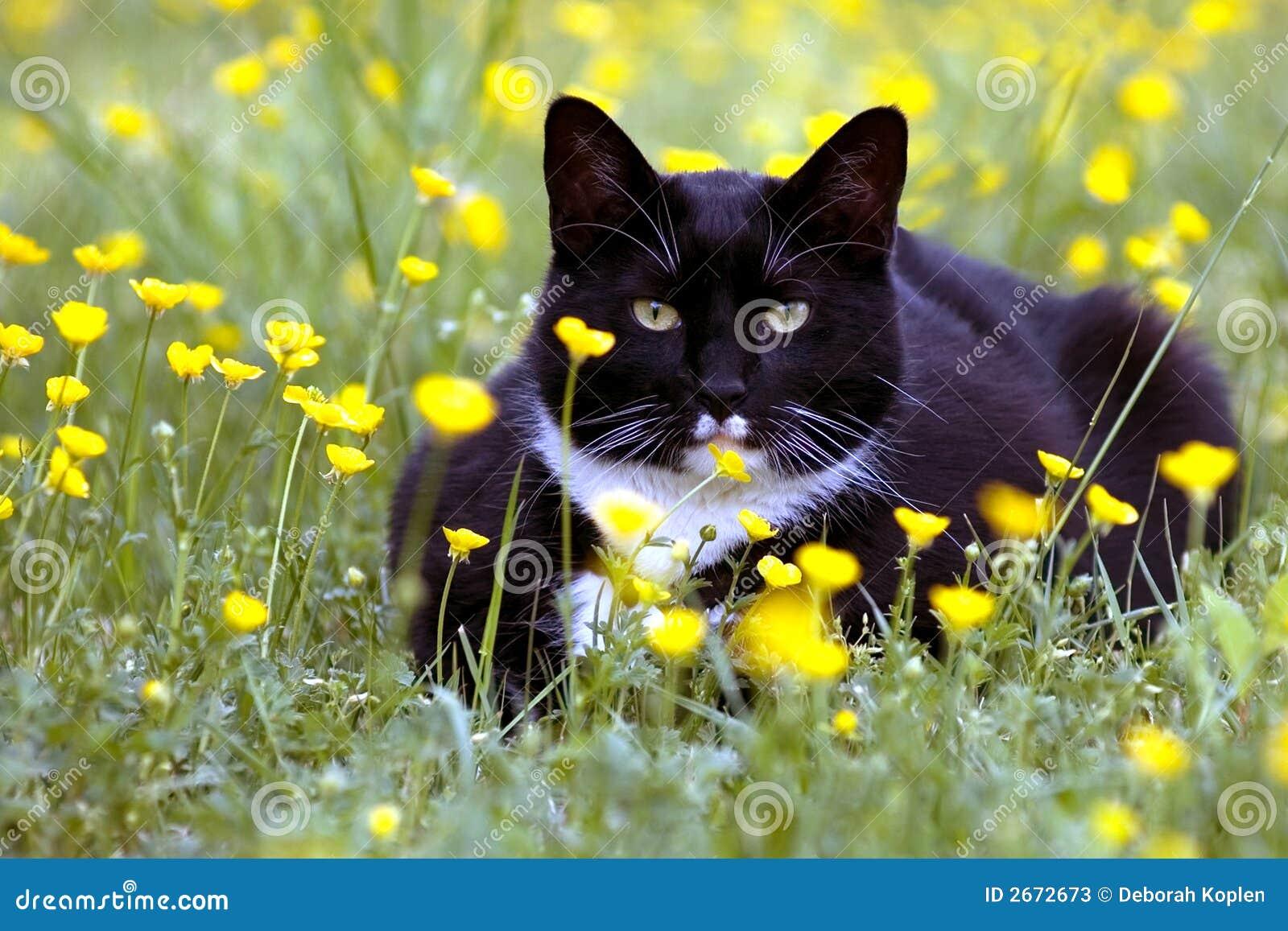 El gato se agachó en flores