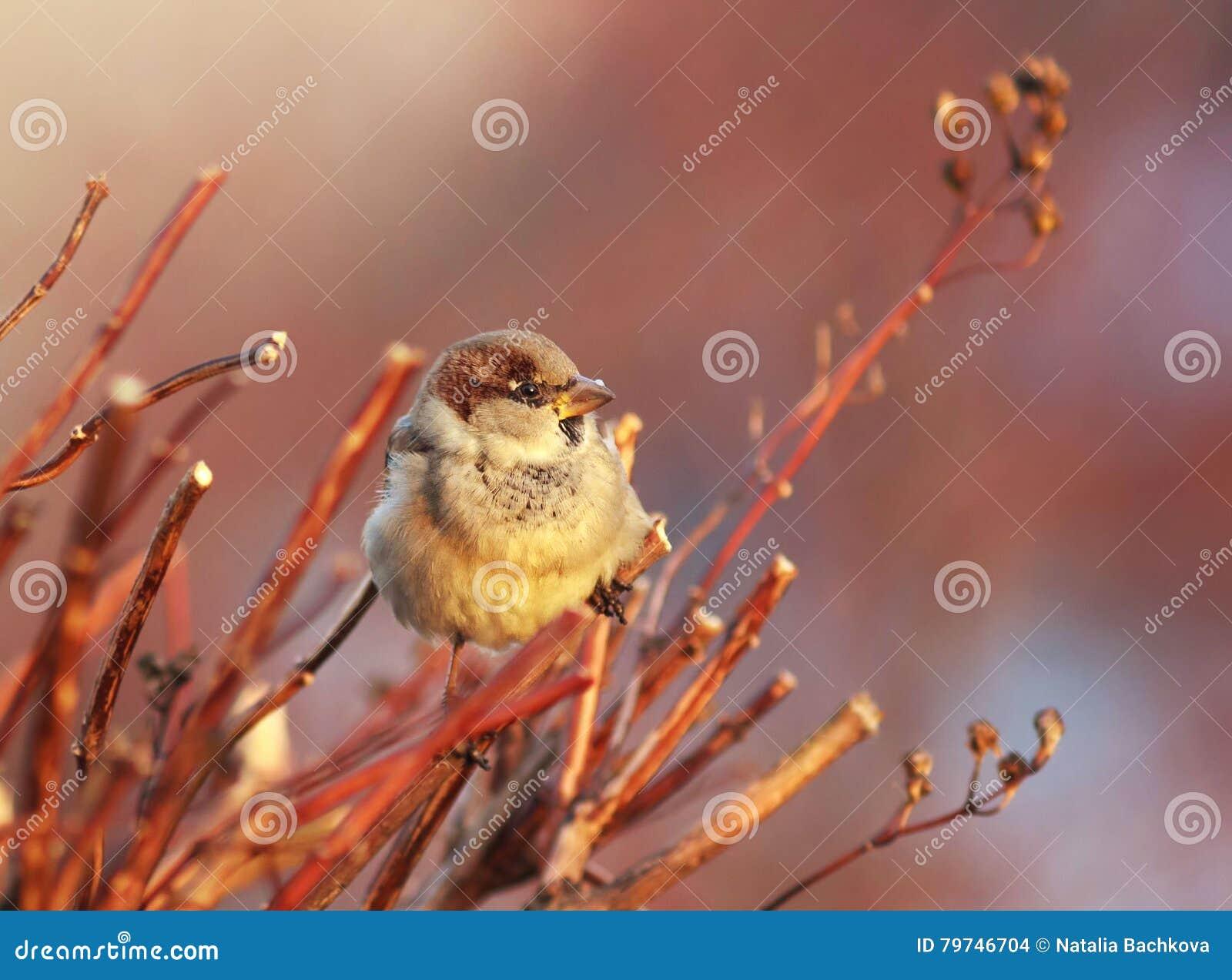 El gorrión del pájaro se sienta entre las ramas bañadas en luz del sol