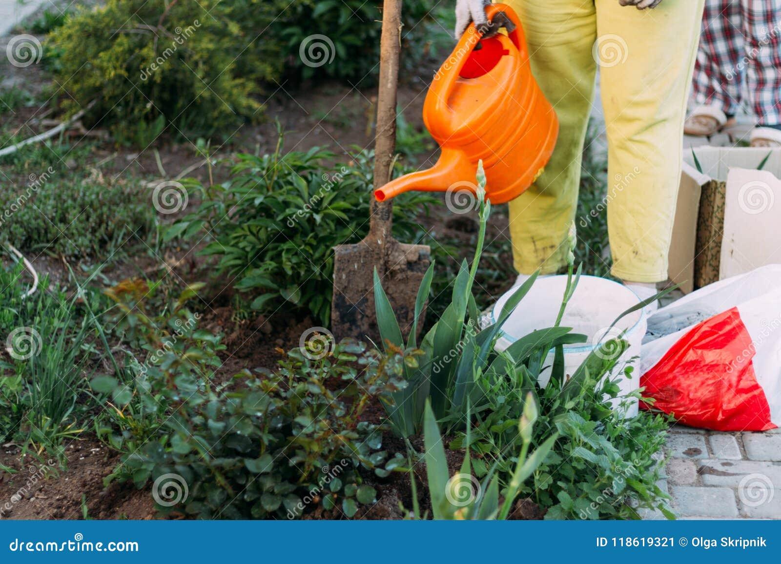 El granjero de la mujer toma el cuidado de las plantas en la plantación farming añada el fertilizante plantas de riego de una reg