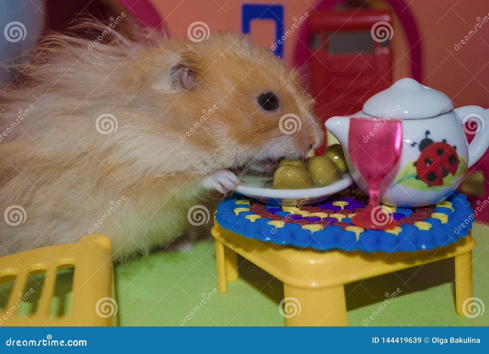 El h?mster marr?n claro mullido lindo come los guisantes en la tabla en su casa El animal dom?stico del primer come