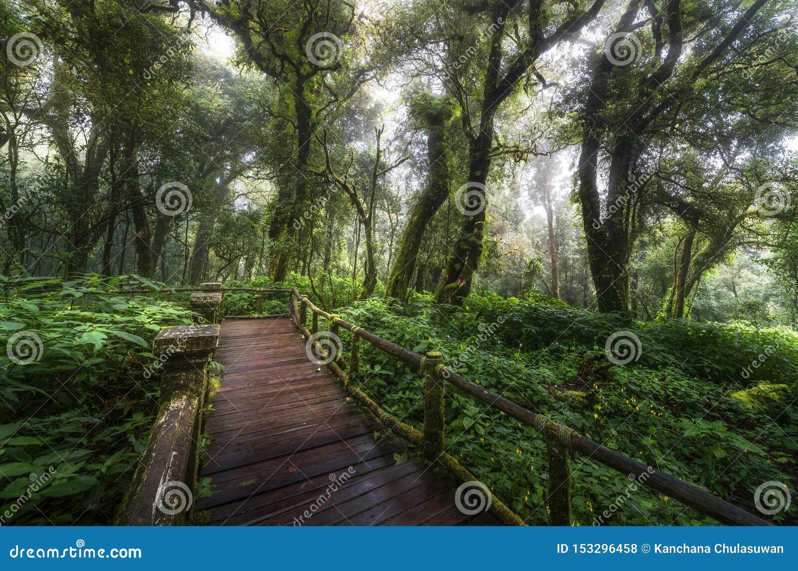 El hermoso del bosque de la nube del sendero de Ang Ka