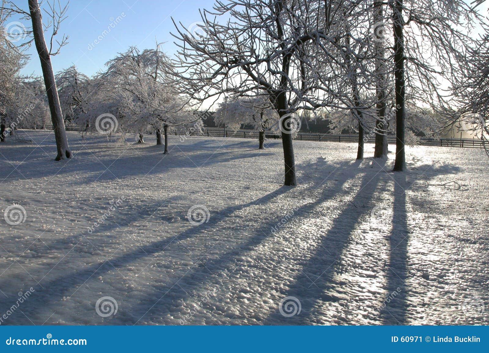El hielo cubrió los árboles 2