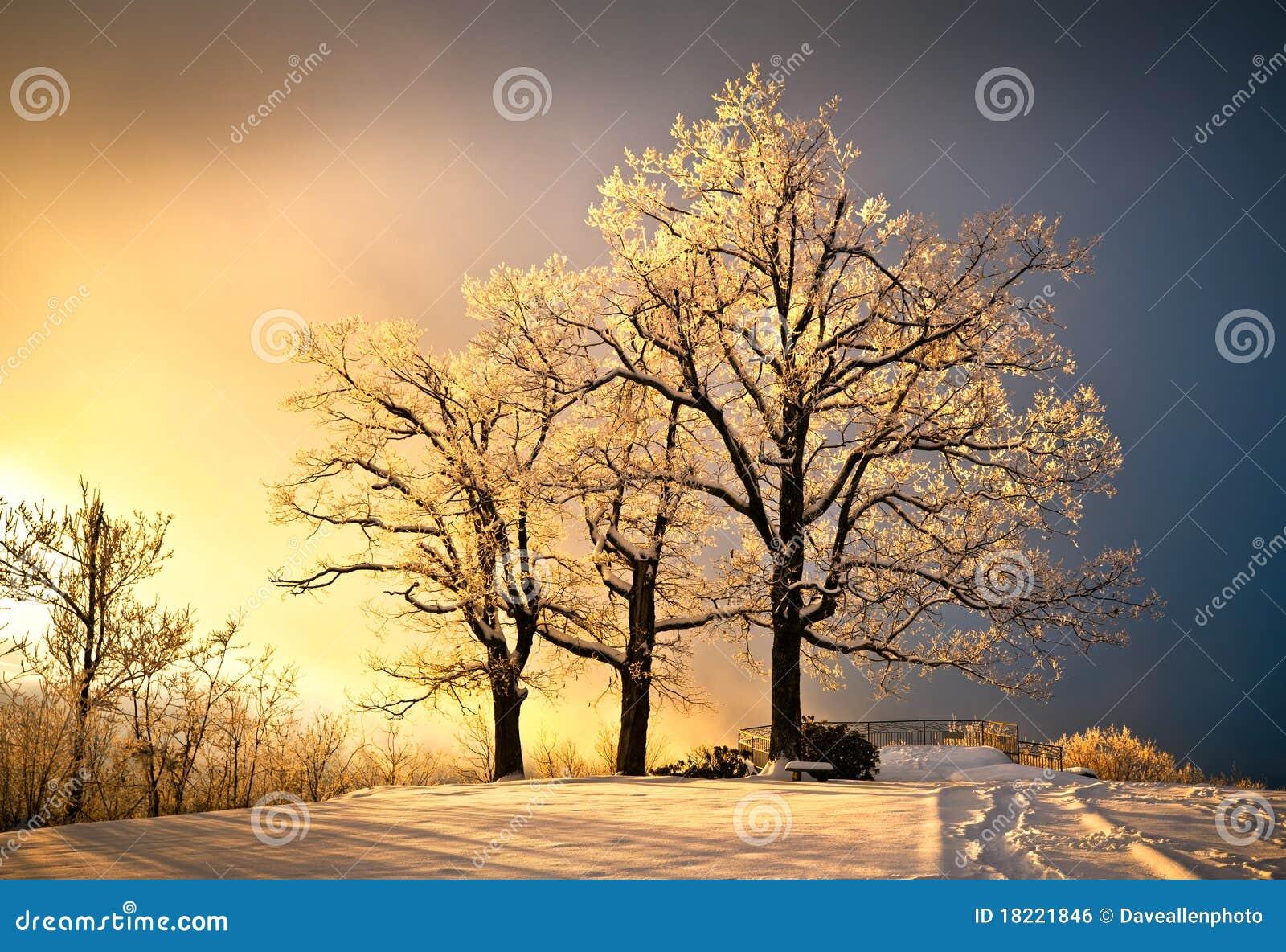 El hielo y la helada cubrieron el árbol de roble en nieve fría del invierno