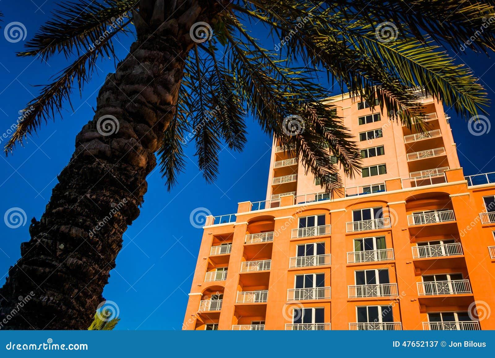 El hotel grande y una palmera en Clearwater varan, la Florida
