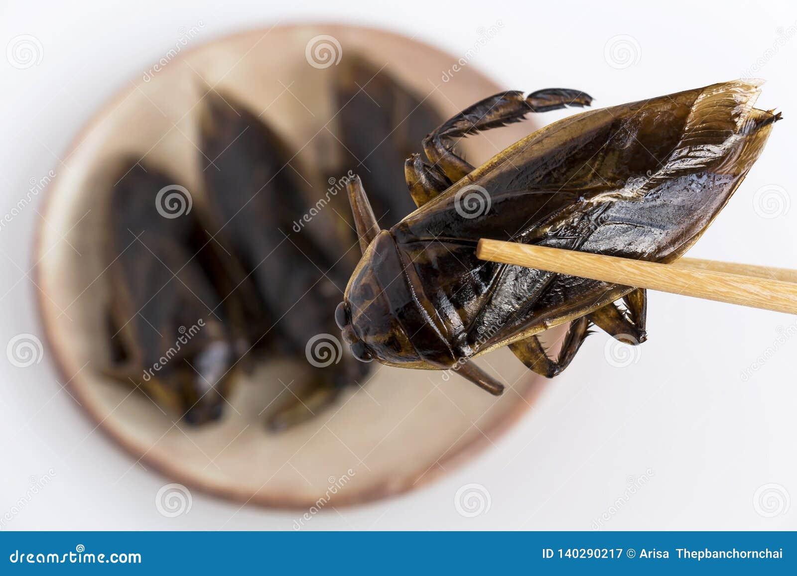 El insecto de agua gigante es insecto comestible para comer como bocado curruscante frito los insectos de la comida en la placa y