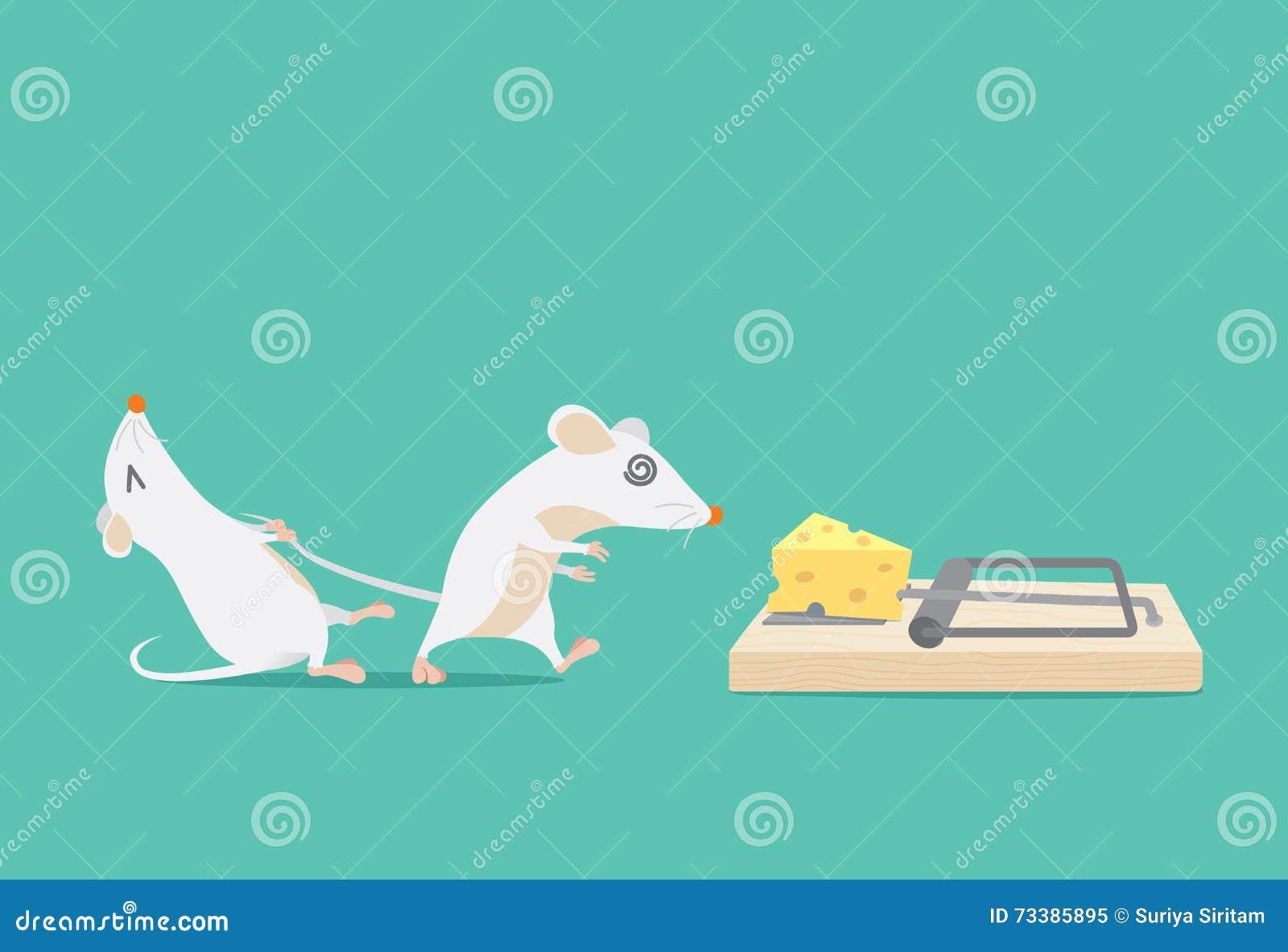 El Intento De La Rata Para Parar Al Amigo Atrapó Porque Queso ...