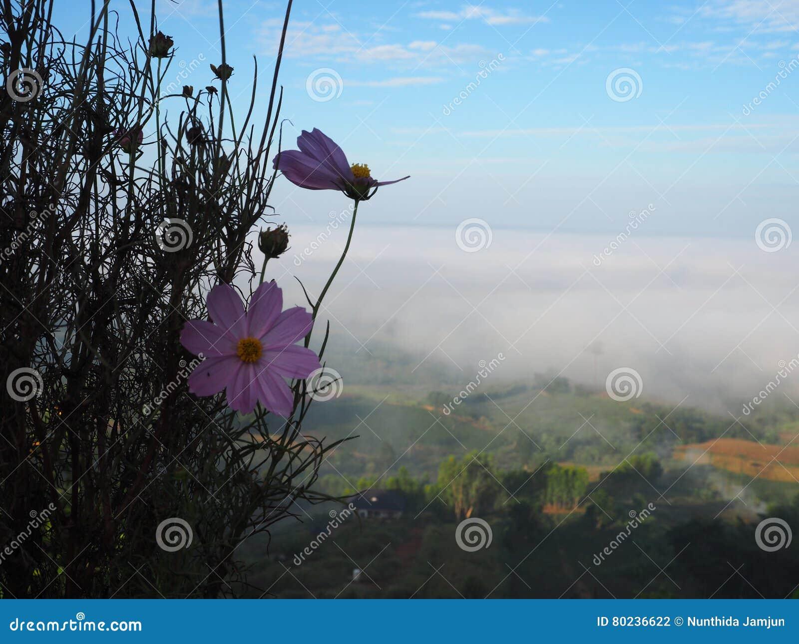 El invierno deja el sol del lihgt de la niebla