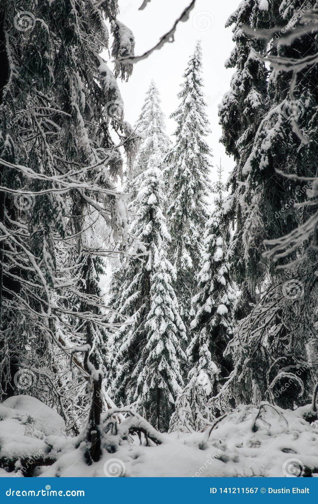 El invierno en Finlandia cubrió en nieve