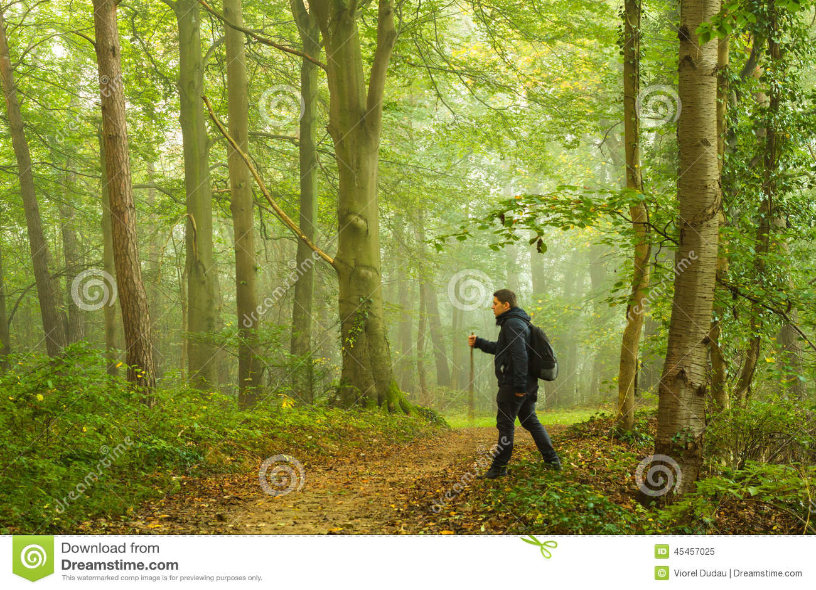 El ir de excursión en bosque