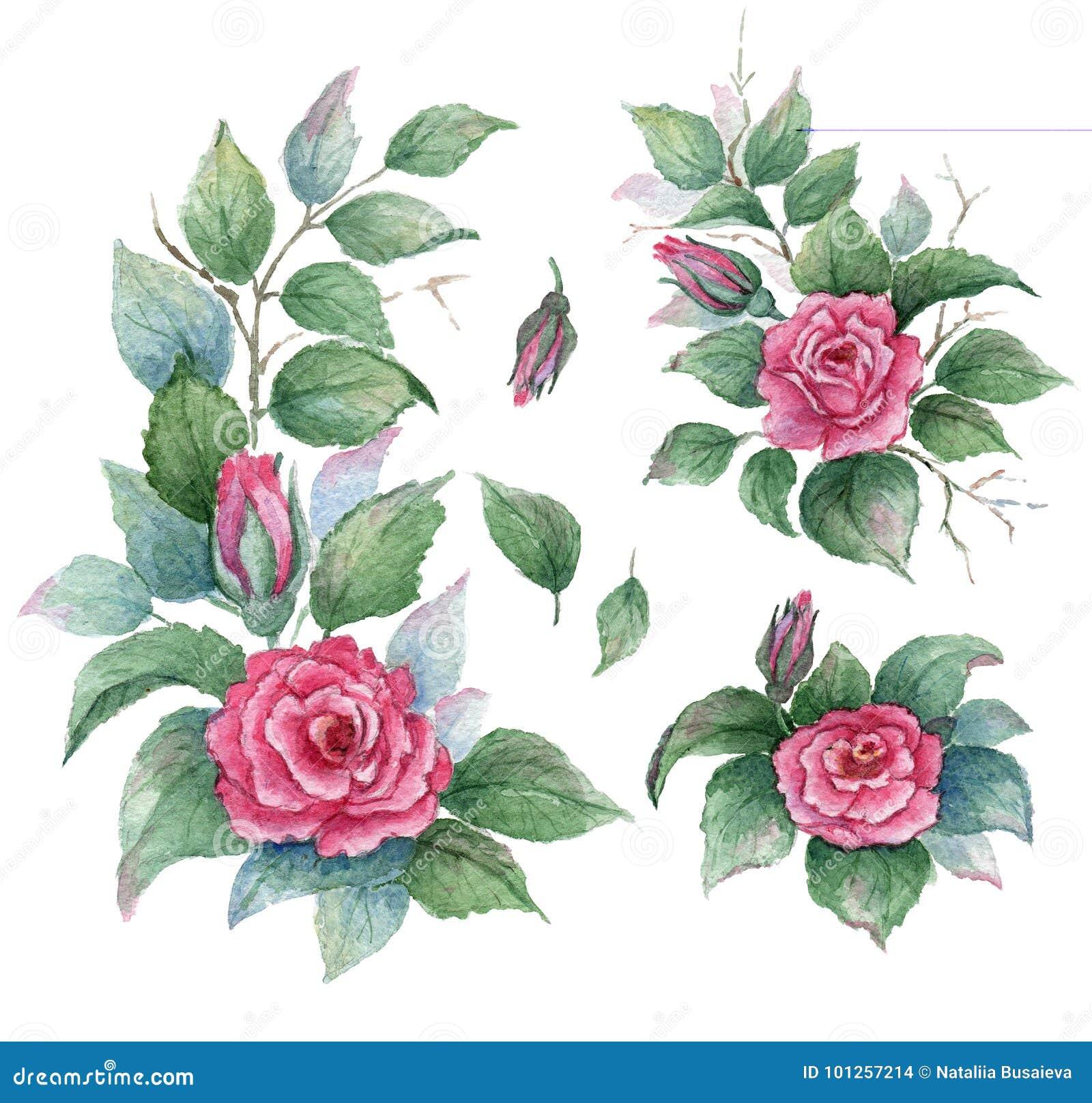 El Jardín De La Colección De Las Flores, Hojas, Brotes, Flores De ...