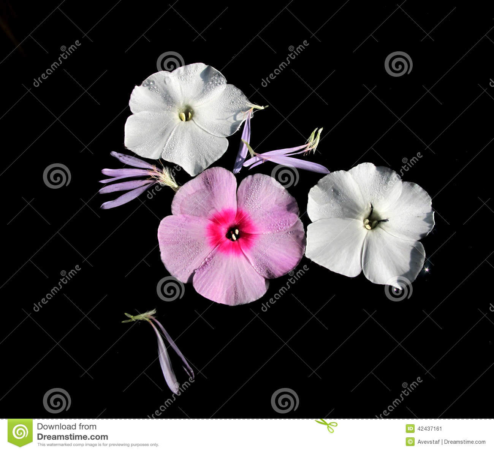 El jardín florece los pétalos