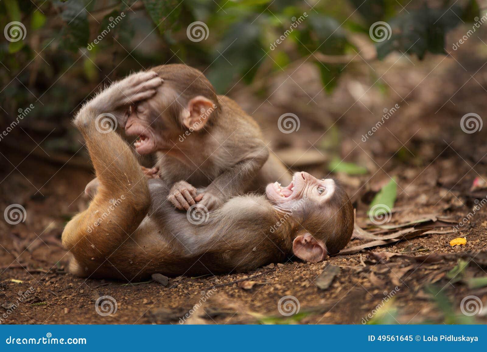 El jugar de los monos