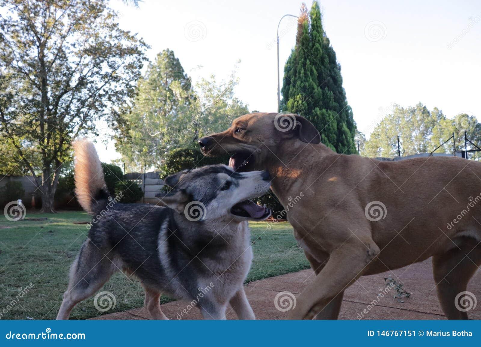 El jugar de los perros ?spero