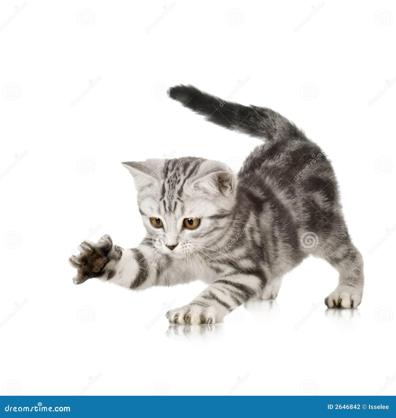 El jugar del gatito
