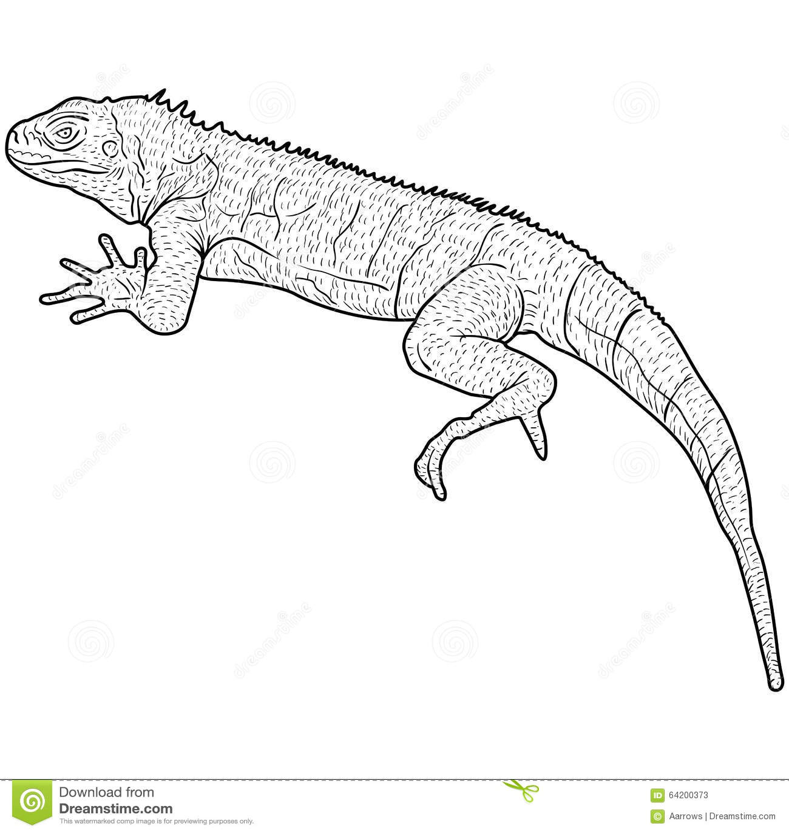 El lagarto es silueta del goanna en un fondo blanco