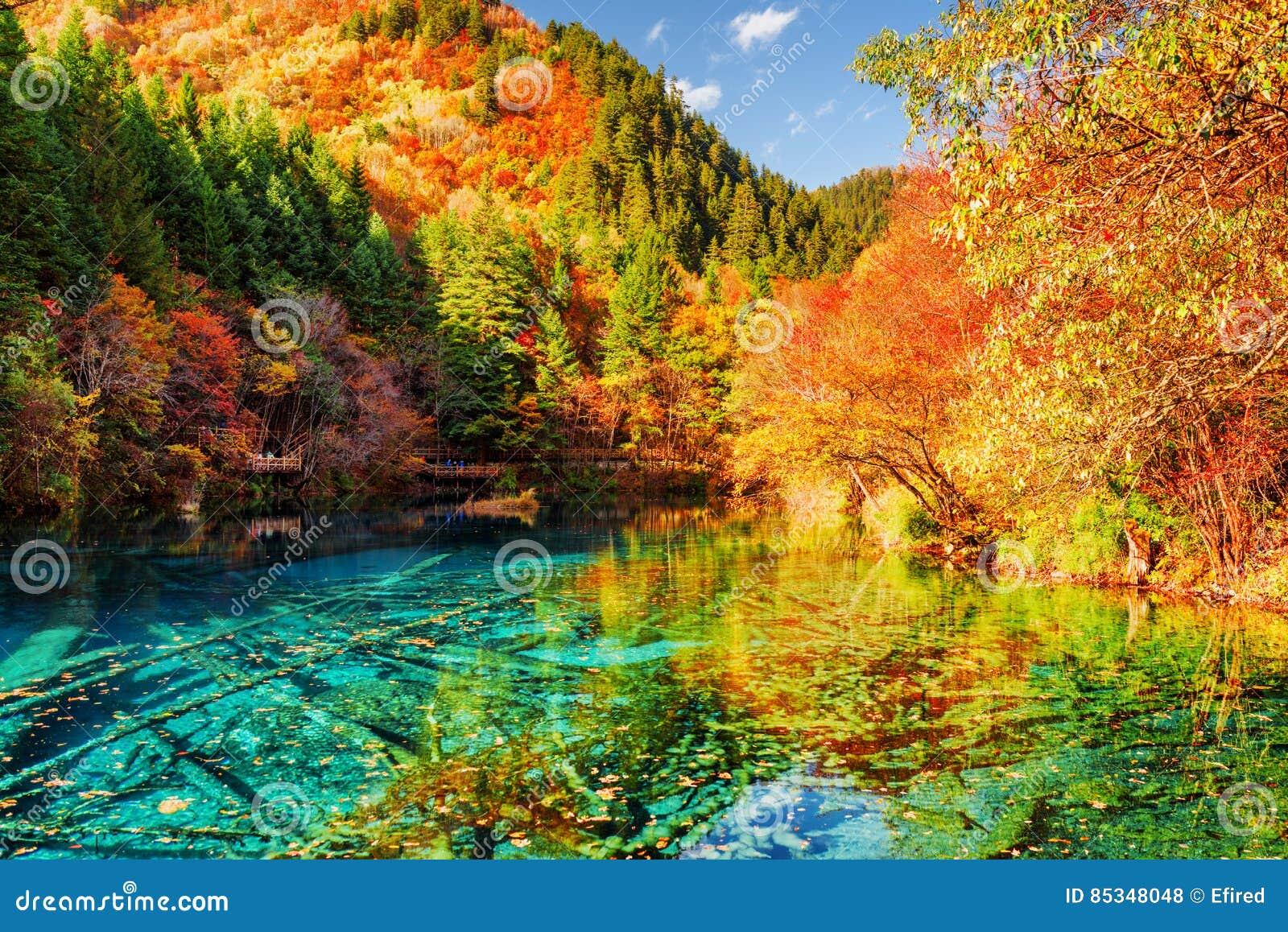 El lago multicolor lake cinco flower entre bosque del otoño