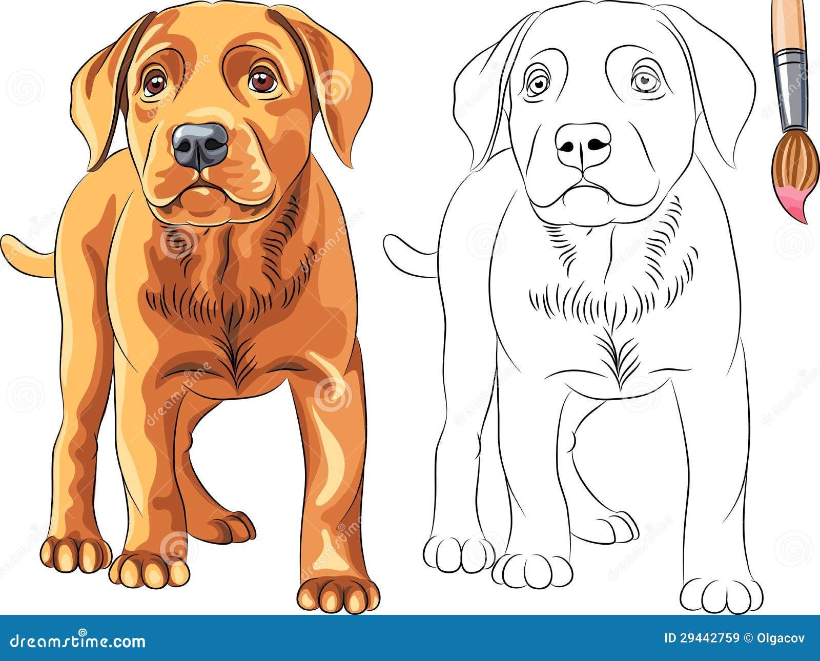El Libro De Colorear Del Vector Del Perro De Perrito Rojo Labrador ...