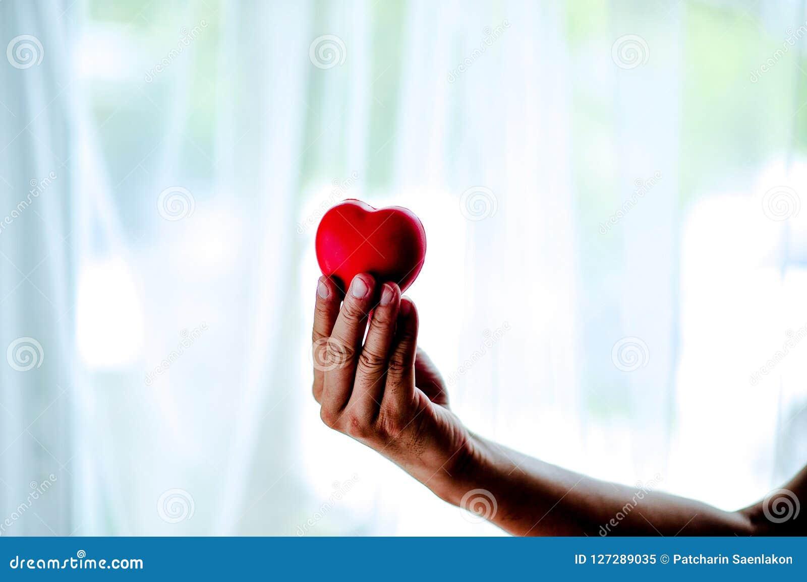 El móvil adulto detiene el corazón, la atención sanitaria, la donación y a la familia rojos I