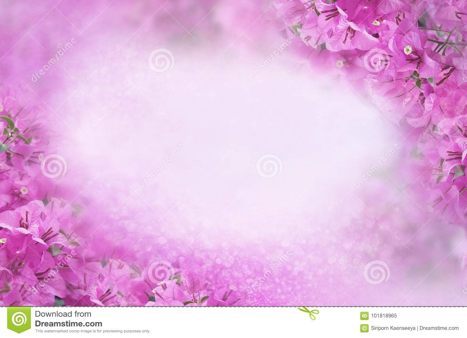 El Marco Púrpura De La Buganvilla De La Flor En Fondo Púrpura Dulce ...
