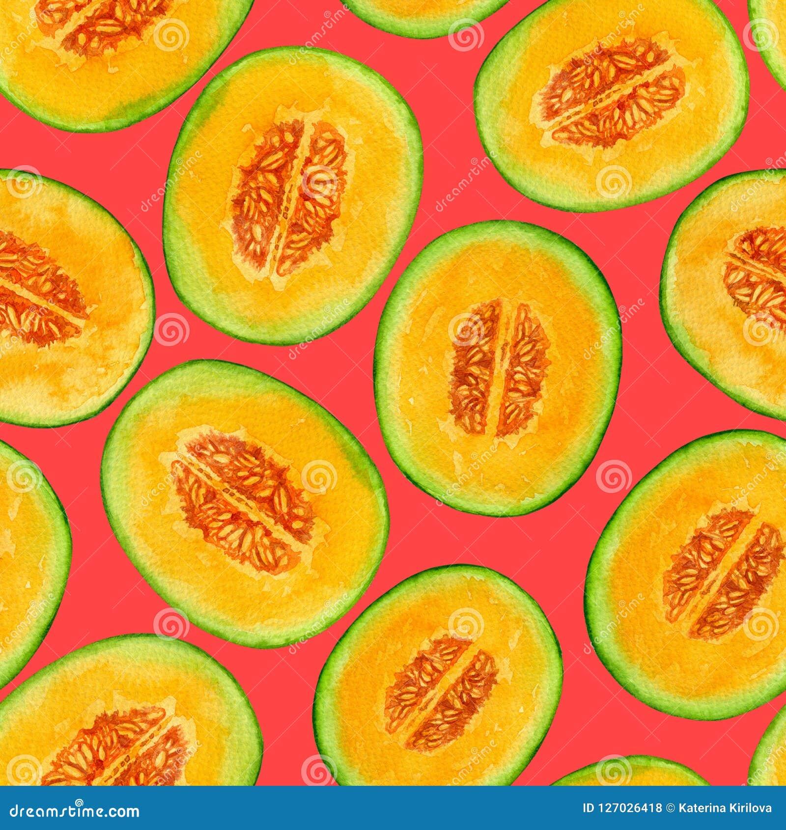 El melón corta el modelo de la acuarela
