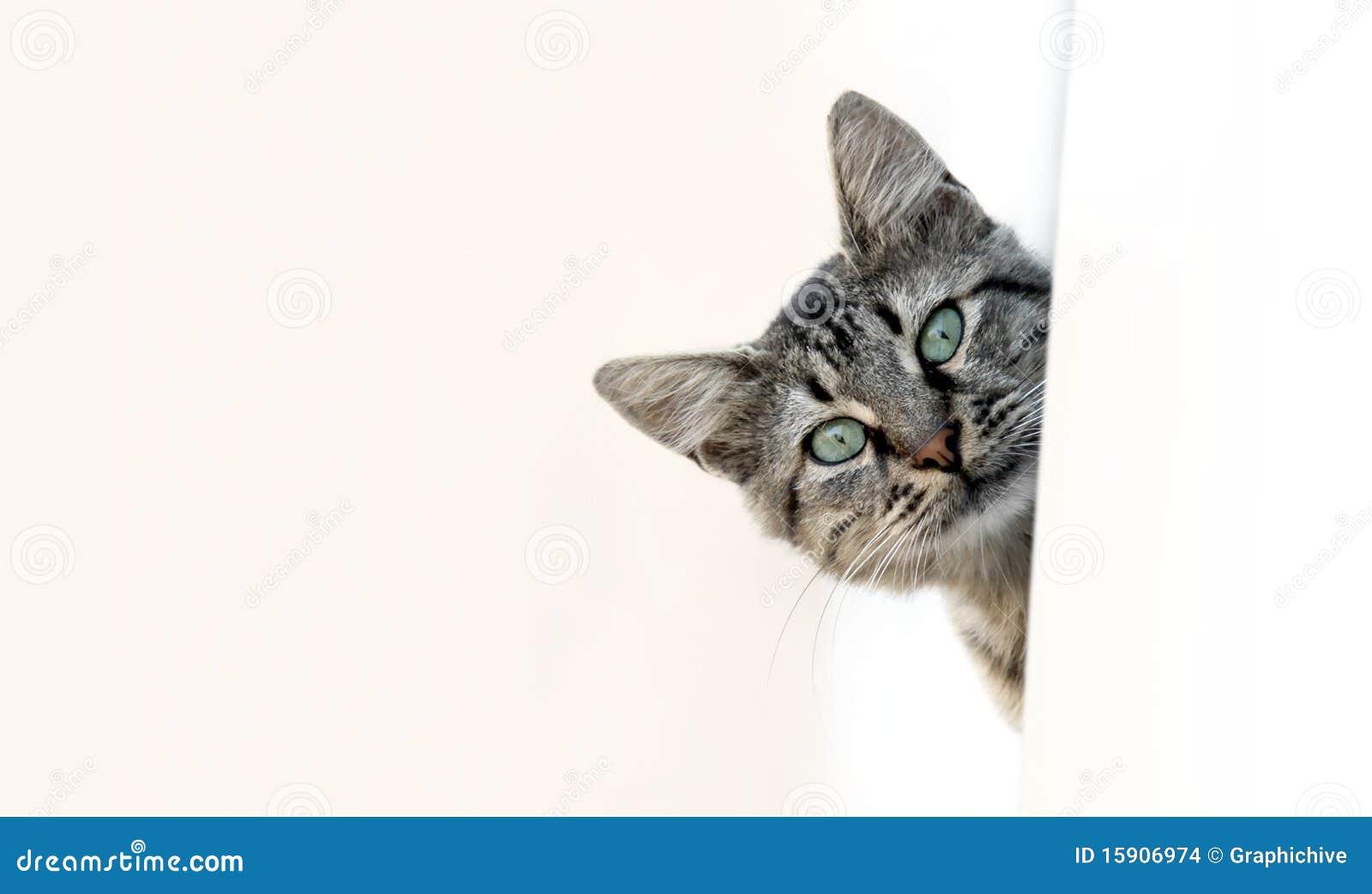 El mirar a escondidas del gato