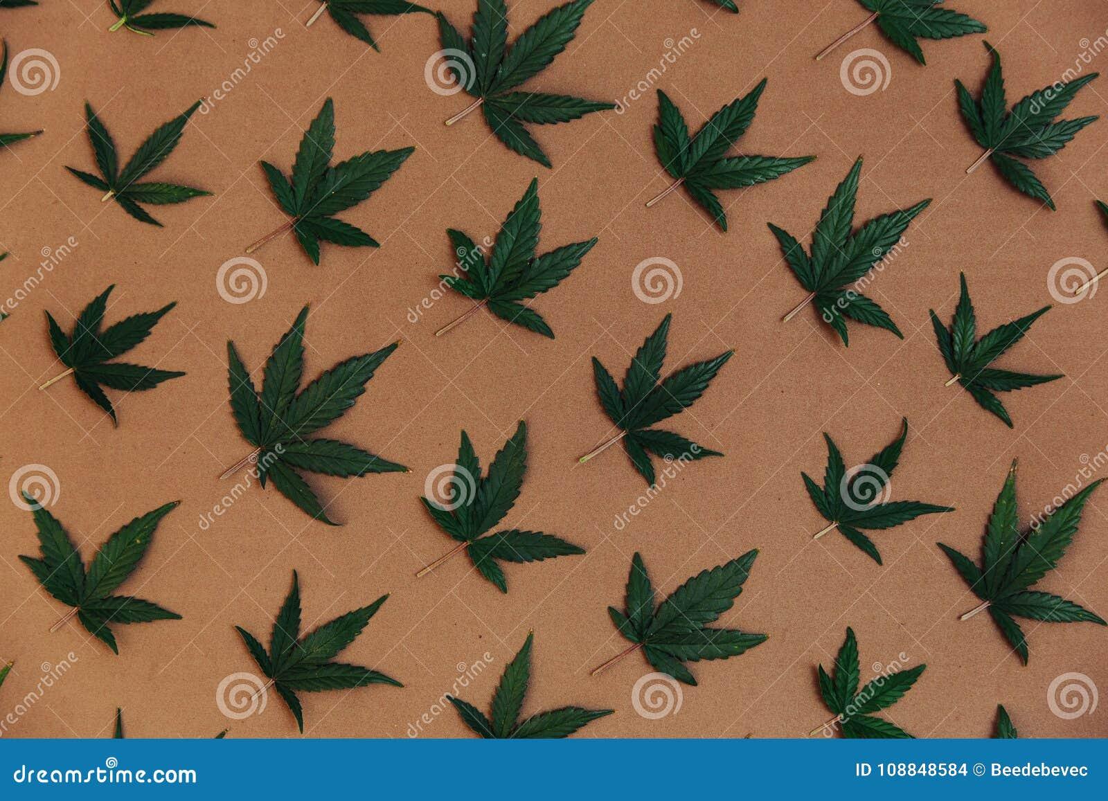 El modelo de un cáñamo se va Mala hierba de la marijuana de Ganja