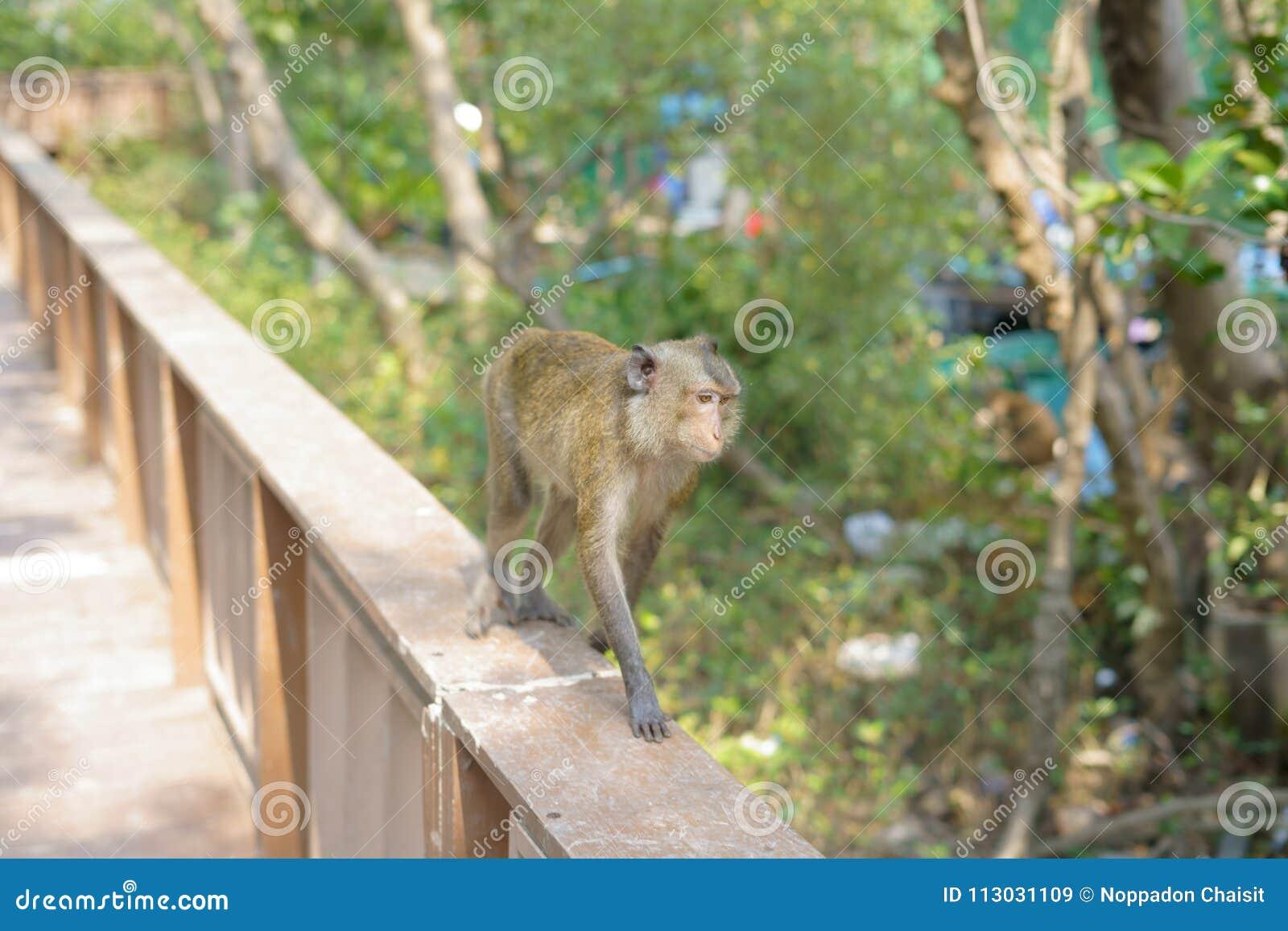 El mono está buscando algo