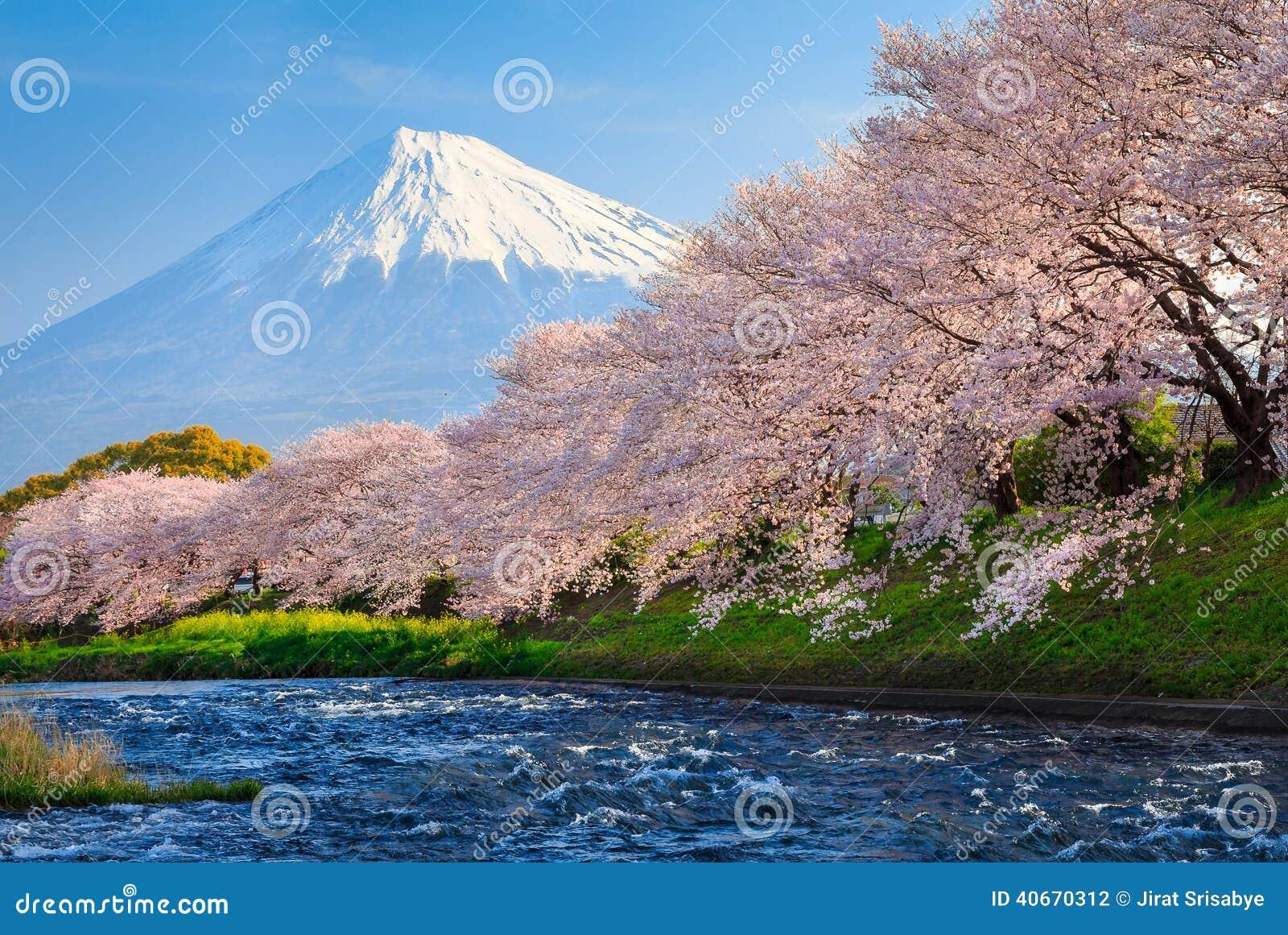 El monte Fuji y Sakura