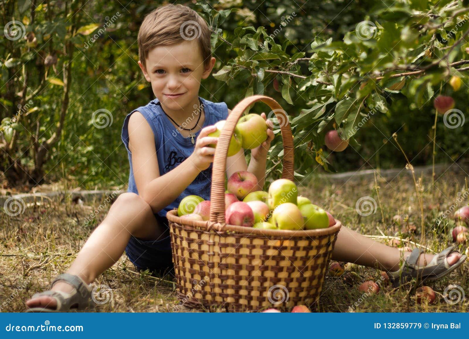 El muchacho en el jardín que se sienta con una cesta por completo de manzanas
