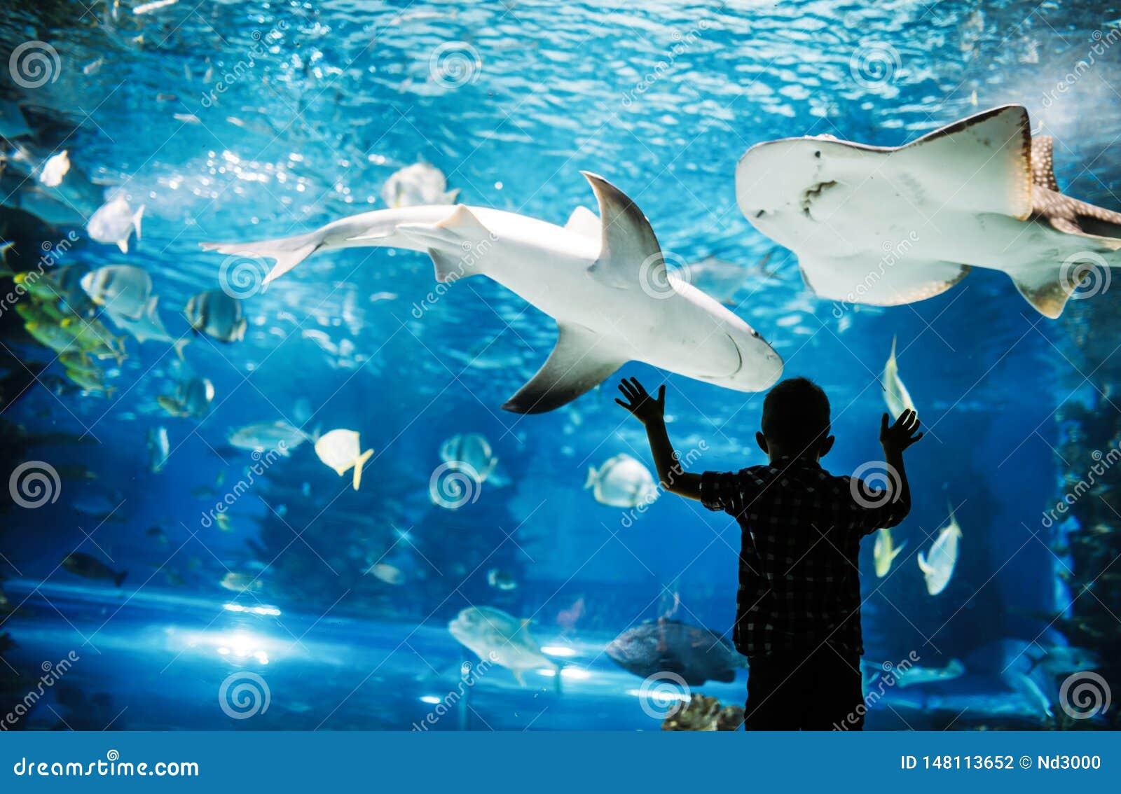 El muchacho lindo mira pescados en acuario