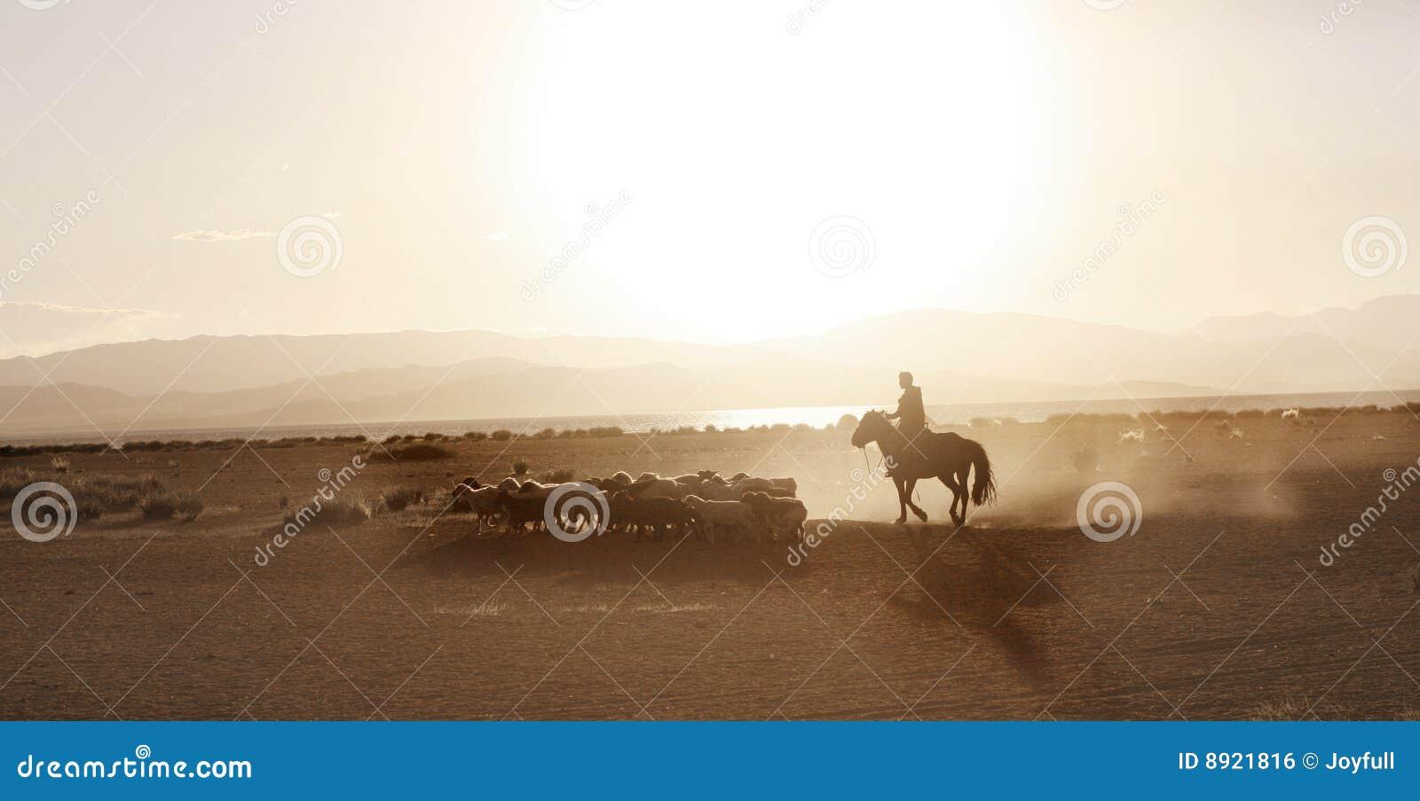 El muchacho mongol condujo la manada de sheeps