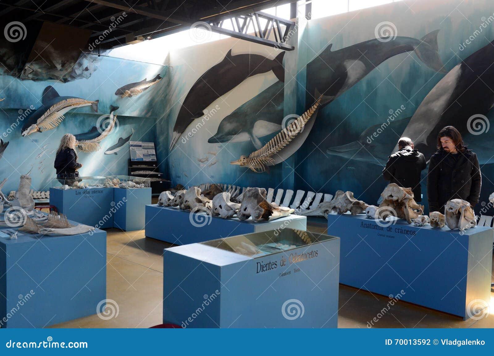 El Museo De Pájaros Y De Mamíferos Marinos En El Estado De Harberton ...